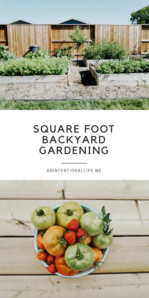 Square foot backyard gardening with raised garden beds in a small-ish space.