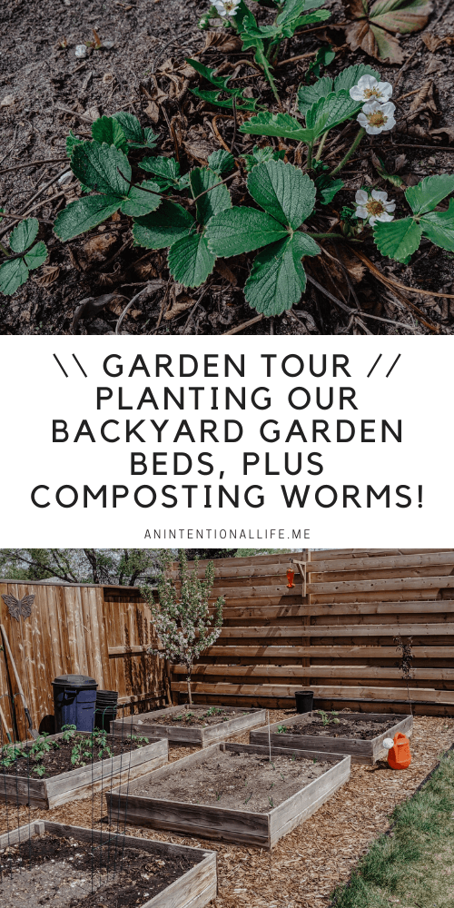 Garden Tour - Planting Our Backyard Garden Beds, The First Rhubarb Harvest of the Season Plus Composting Worms!