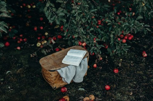 The Best Books to Read in the Fall - novels that will set the fall mood